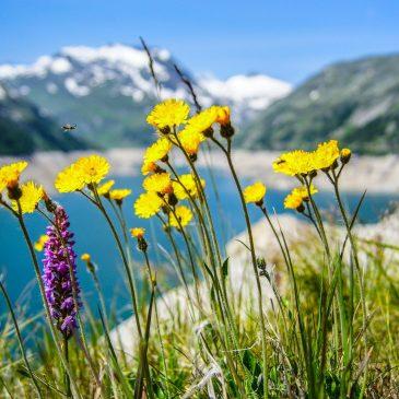 Alpenblumen- und Kräutergarten
